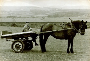 Granddad on the Cart, Lumpsey Pastures,