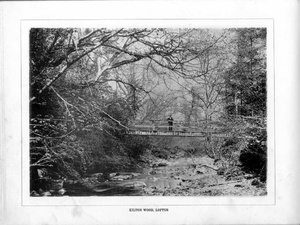Kilton Wood