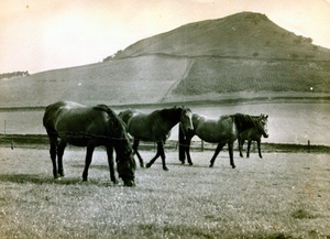 Our Horses at Miss Kitchens 1960s